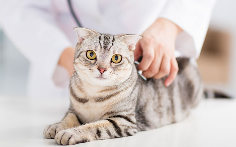 Common Cat Injuries and What to Do About Them