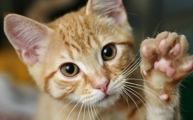 In the News: Saving Shelter Cats with a High-Five