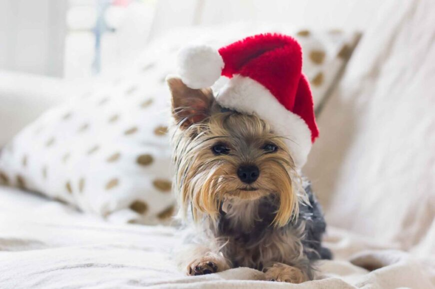 3 Reasons You Really Shouldn't Buy Someone a Pet for Christmas