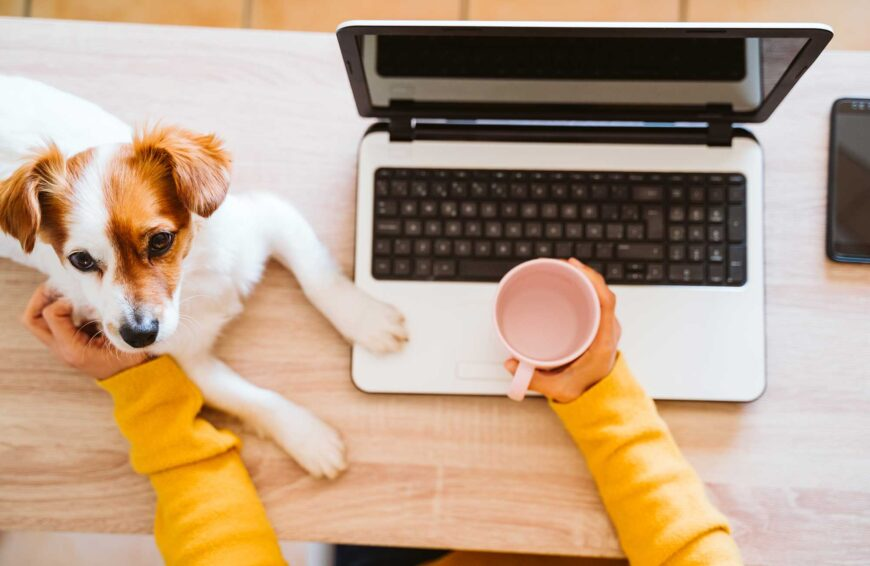 How to Prepare Your Pets for the End of Working From Home